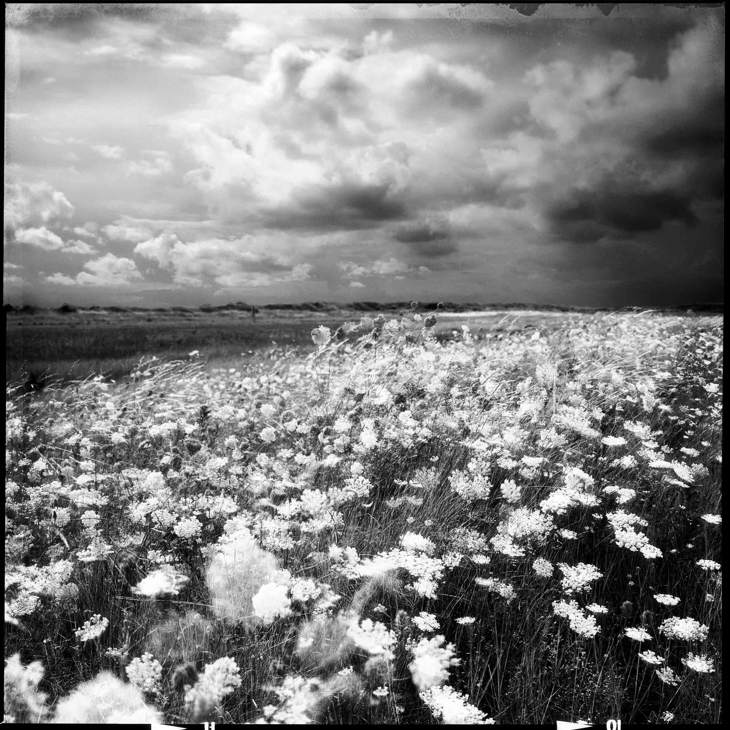 Steve Thornton Photography